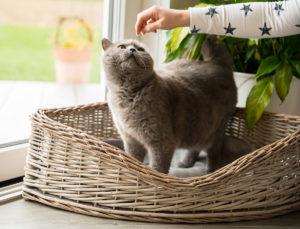 Die Katzen der Nussers haben ein eigenes Zimmer mit riesigem Kratzbaum. (Foto: FingerHaus)