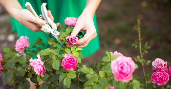 Eine Blütenpracht aus bunten Blumen ist das ganze Jahr über möglich.