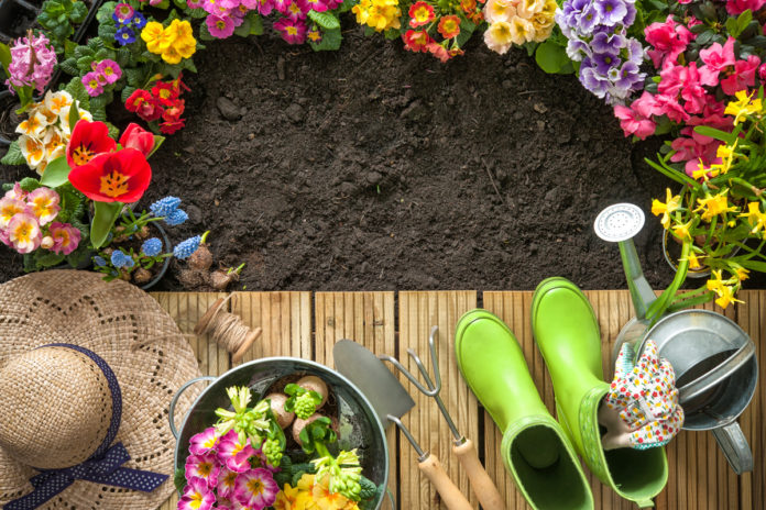 Wir zeigen Dir Tipps und Tricks für Deinen Garten.
