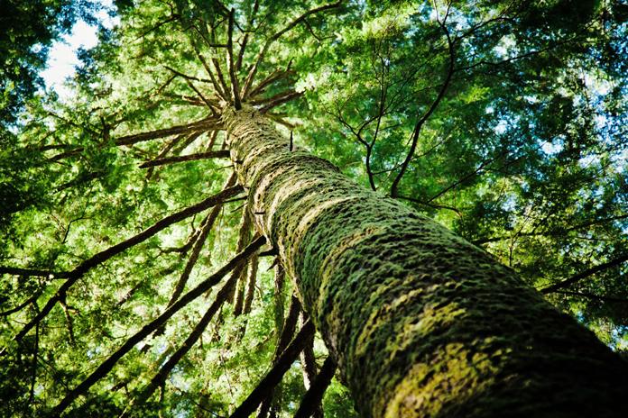 Holz ist ein Baustoff mit Tradition und Zukunft. (Foto: FingerHaus)