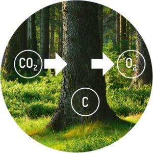 Ein Kubikmeter Holz speichert eine Tonne CO₂.