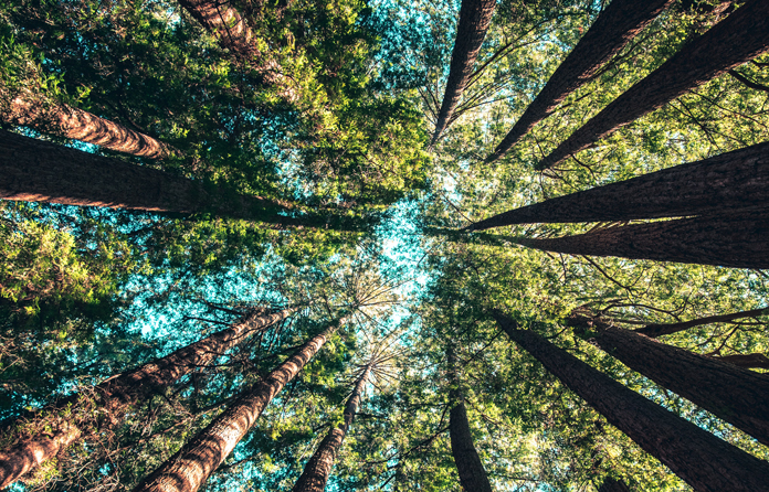 Jeder Kubikmeter Holz bindet dauerhaft eine Tonne CO².
