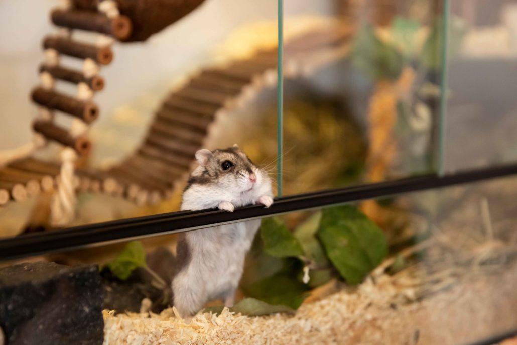 Da streckt sich Hamster Giny – und bewundert die vielen liebevoll gestalteten DIY-Werke der Bauleute: den selbst gebauten Couchtisch, das Regal im Bad und die Garderobe. (Foto: FingerHaus)